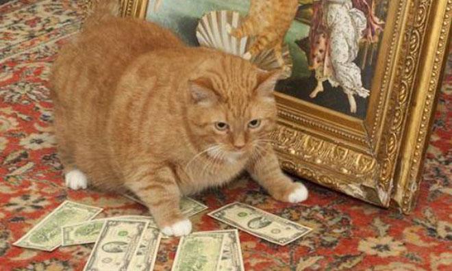 En Renkli Kedi Fotoğrafları
