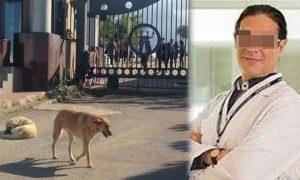 Profesör Sokak Köpeğini Bıçakladı