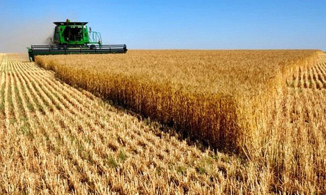 AKP Döneminde Tarımın Acıklı Öyküsü