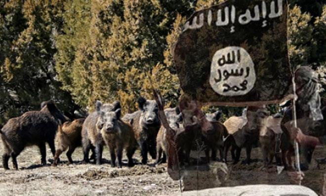 Yaban Domuzları IŞİD'e Saldırdı