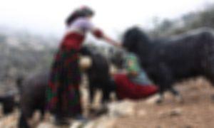 Bir Hayvanseverin Çığlığı… Komşuları Hayatını Zindana Çevirdi