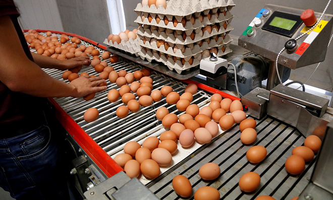 Zehirli Yumurtalara Türkiye'de de Rastlandı